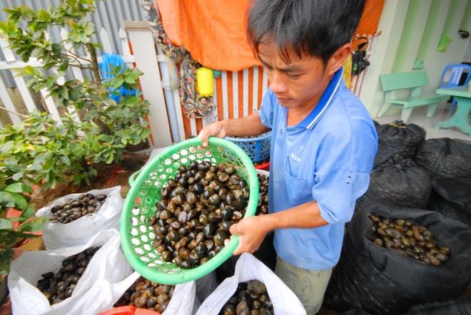 Nong dan 'nuoi' oc buou vang ban cho thuong lai Trung Quoc hinh anh 13