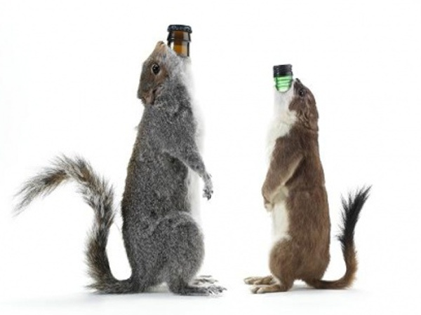 Nhung loai bia dat nhat the gioi hinh anh 3