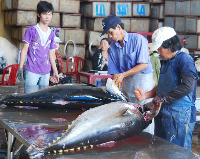 Nhung con ca ngu dai duong nua ta tren bien Phu Yen hinh anh 10 Rửa và sơ chế cá ngừ đại dương ngay tại bến.