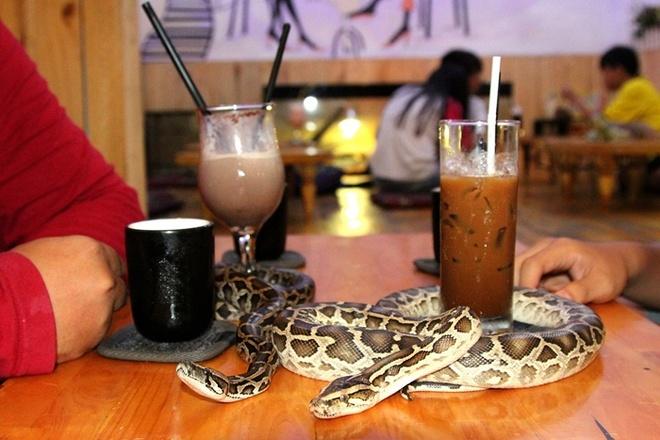 Quan ca phe rang xay voi bo sat doc dao nhat Sai Gon hinh anh 5 Những chú trăn quấn quanh những ly nước uống tạo cảm giác độc lạ cho khách.