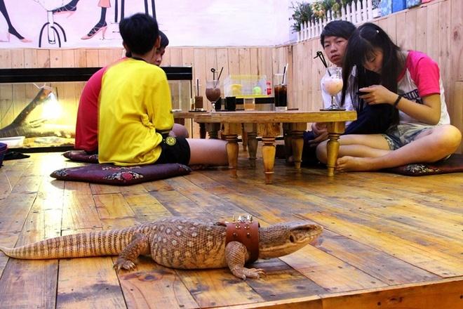 Quan ca phe rang xay voi bo sat doc dao nhat Sai Gon hinh anh 7 Những chú bò sát bò khắp nơi trên nền nhà.