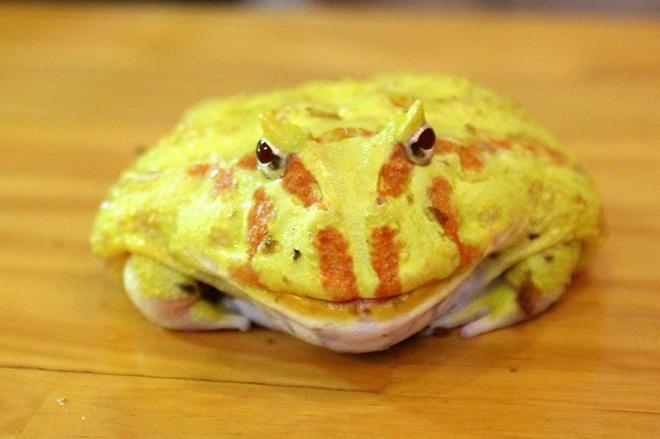 Quan ca phe rang xay voi bo sat doc dao nhat Sai Gon hinh anh 11 Một chú ếch có màu sắc sặc sỡ.