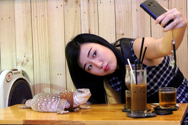 Nhiều khách hàng uống nước tại quán thích thú chụp ảnh cùng những chú bòsát hiền lành.