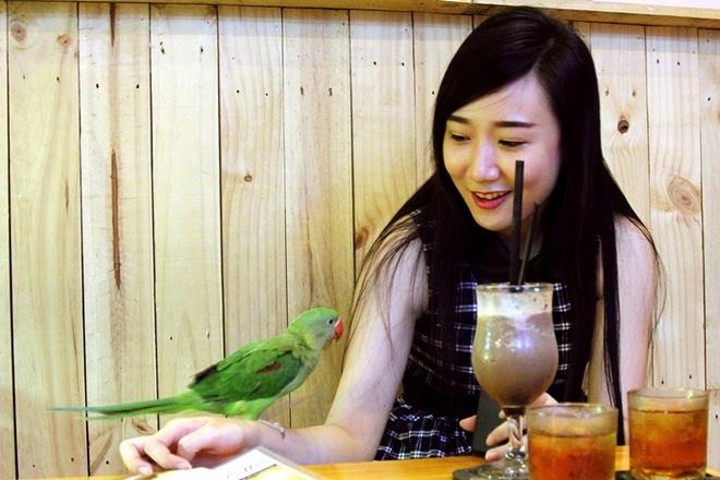 Quan ca phe rang xay voi bo sat doc dao nhat Sai Gon hinh anh 13  Những con vật thân thiện chủ động làm quen với khách hàng.