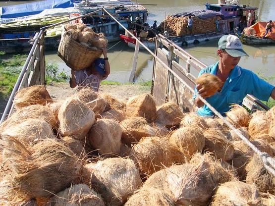 Nong thuy san hut hang, rot gia vi nha xe tang cuoc 3-4 lan hinh anh