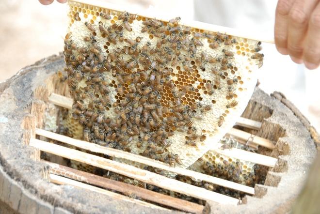 Thay giao sang kien nuoi ong trong bong dua, thu chuc trieu hinh anh