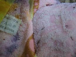Nhung quan ao, do dung bi phat hien co vat la gay tranh cai hinh anh 7 Ngày 12/3, chị T. (Đồng Nai) bất ngờ phát hiện 4 chiếc khăn tắm được ngâm trong thau nước có rất nhiều ấu trùng màu đen bám đầy vào chiếc khăn, bò loằng ngoằng và bơi trong nước như đỉa con. Những chiếc khăn này chị mua tại khu vực chợ Tân Hiệp, phường Tân Hiệp từ khoảng 1 tháng nay nhưng mới đưa ra sử dụng. Đây là khăn mặt, khăn tắm có nguồn gốc xuất xứ từ Trung Quốc được bày bán tràn lan ngoài chợ với giá tiền chỉ vài nghìn đồng/chiếc.