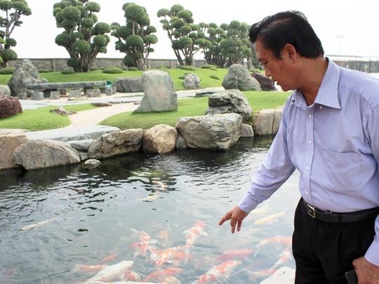 Ty phu ca koi hinh anh 3 Ông Ngô Chánh, chủ công viên cá koi ở huyện Hóc Môn, TP HCM, giới thiệu về những chú cá do ông mang từ Nhật Bản về.