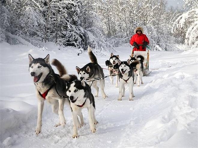 Nhung tour du lich hang sang khien ban thot tim hinh anh 1 Công ty White Wilderness Sled Dog Adventures đưa ra tour trượt tuyết cùng chó kéo, ở trong các căn lều của người Mông Cổ và người Da Đỏ ở Minnesota (Mỹ).