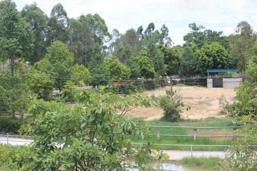 Vuon thu quy hiem cua dai gia Le Thanh Than hinh anh 2 Khu vực nuôi nhốt tê giác.