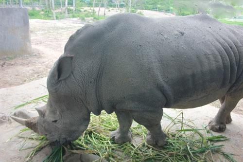 Vuon thu quy hiem cua dai gia Le Thanh Than hinh anh 5 Giá trị của 2 cá thể tê giác này đến nay vẫn chưa được tiết lộ.