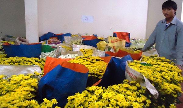 Nong dan Da Lat trong hoa cuc Nhat xuat sang Thai Lan hinh anh
