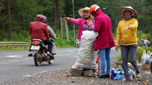 Ban 2 kg hong Da Lat chua mua du cay kem loai re hinh anh
