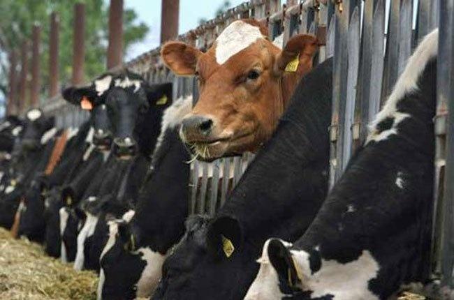 Doanh nghiep Uc muon dau tu nuoi 20.000 con bo o Quang Ninh hinh anh 1 Công ty Austrex của Úc sẽ đầu tư trang trại nuôi bò thịt tại tỉnh Quảng Ninh.