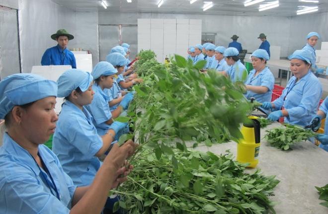 Vu canh cao rau qua Viet Nam nhiem khuan: Quyt lam cam chiu hinh anh