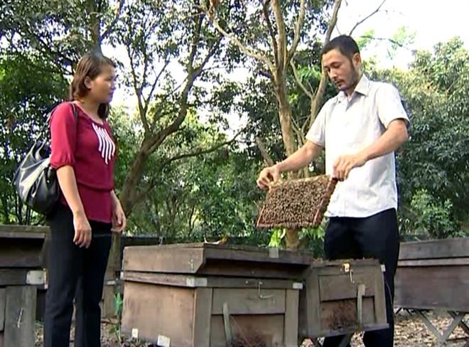 Anh Phong hướng dẫn cách chăm sóc ong.