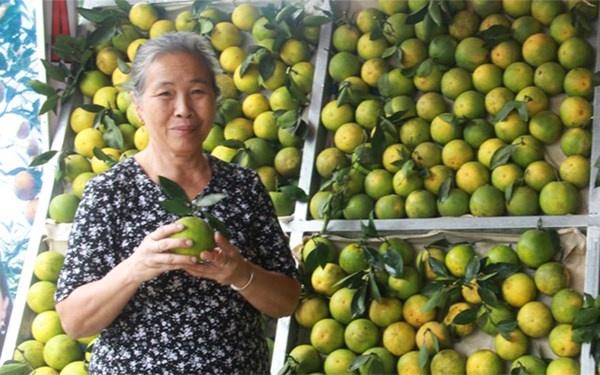 """Cach phan biet cam vang Cao Phong voi cam Trung Quoc hinh anh 7 Bà Nguyễn Thị Hằng, với thương hiệu """"Hà Cam"""" đã trồng và buôn bán cam hàng chục năm nay cho biết, cam thường được phân ra hai loại, loại một khoảng 40.000 đồng/kg, loại 2 tùy theo từng loại cam có thể dao động từ 25.000 – 30.000 đồng/kg."""