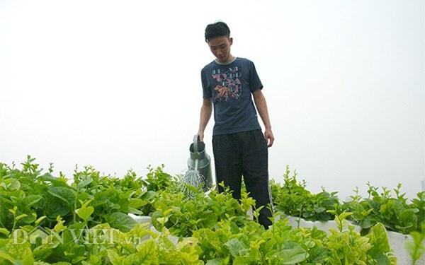 Nha ong 7 tang giua Ha Noi 'ngap' trong rau, ca, ga, lon,... hinh anh 2 Gần 200 thùng xốp rau sạch các loại giúp gia đình ông Tiến nhiều năm nay rất hạn chế việc mua rau ở ngoài.