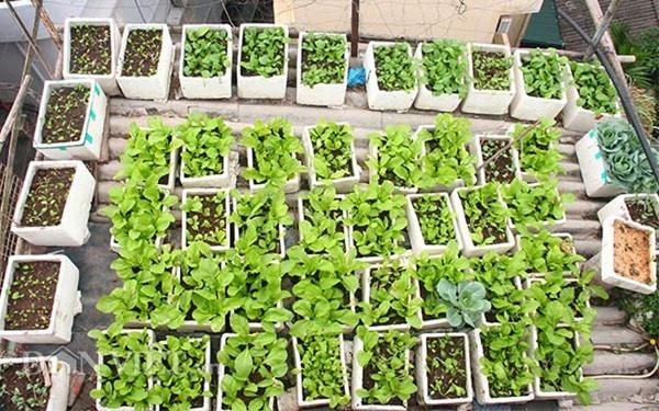 Nha ong 7 tang giua Ha Noi 'ngap' trong rau, ca, ga, lon,... hinh anh 4 Toàn cảnh vườn rau tầng 6 với diện tích khoảng 8m2.