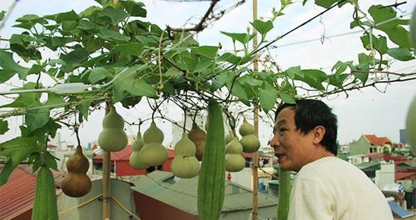 Ong chu dat Ha thanh voi gian bau tien o san thuong tang 5 hinh anh