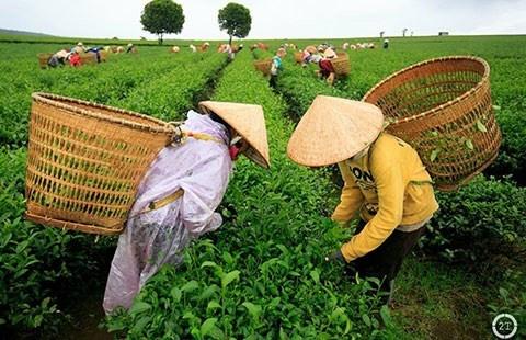 Tra Viet Nam khong nhiem dioxin hinh anh