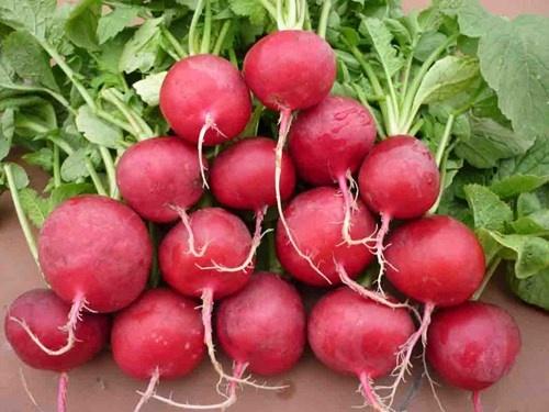10 thuc pham la 'khac tinh' cua benh tri hinh anh 8  Ngoài việc giúp cho chuyển động của ruột tốt, củ cải còn chứa một số dưỡng chất rất tốt cho ruột kết.
