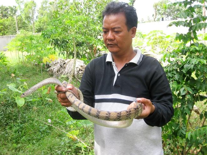 Nguoi dan ong Khmer lam giau nho tha ran trong vuon hinh anh