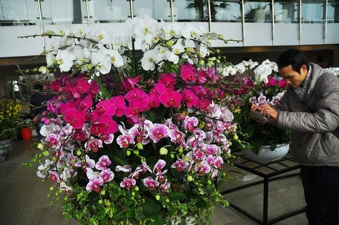 Chậu hoa lan có giá bán 65 triệu ở chợ hoa Quảng Bá, Hà Nội.
