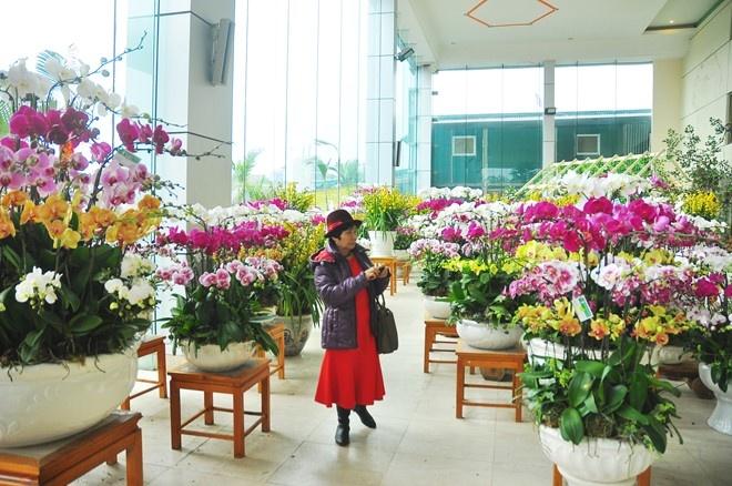 Các chậu hoa lan nhập ngoại giá hàng trục triệu/chậu được bán ở chợ hoa Quảng Bá, Hà Nội.
