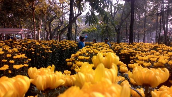 Khách mua hoa cúc tại công viên 23/9.