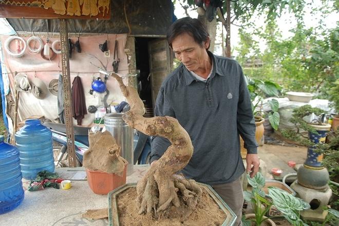 Phu thuy bonsai o lang mai Binh Dinh hinh anh