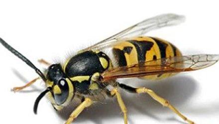 Khong nen chu quan khi bi ong dot hinh anh