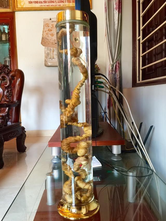 Bi mat dinh sat chuc trieu trong cu sam Ngoc Linh hon 1 kg hinh anh 2