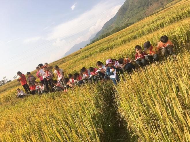 Học sinh không biết tả cánh đồng, cô giáo đưa cả lớp ra ruộng