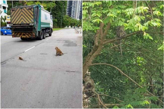 Khi con bi thuong giua duong, nguoi Singapore chuyen lan xe de giup do hinh anh 1