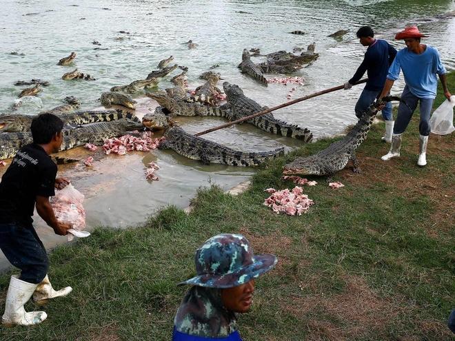 Bé trai 10 tuổi bị cá sấu ăn thịt trước mặt anh chị ruột ở Philippines