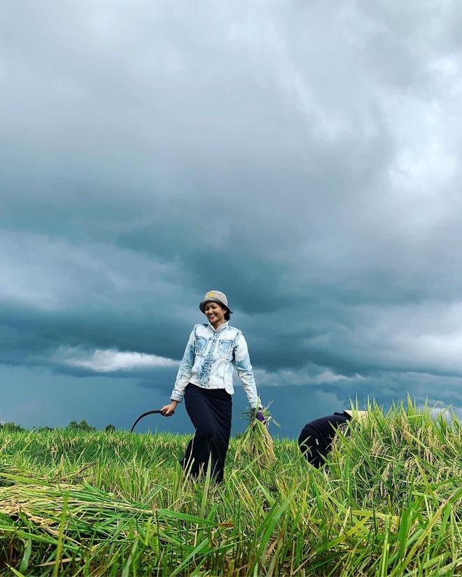 Hoa hậu H'Hen Niê tạm rời xa showbiz, về quê nhặt rau, gặt lúa