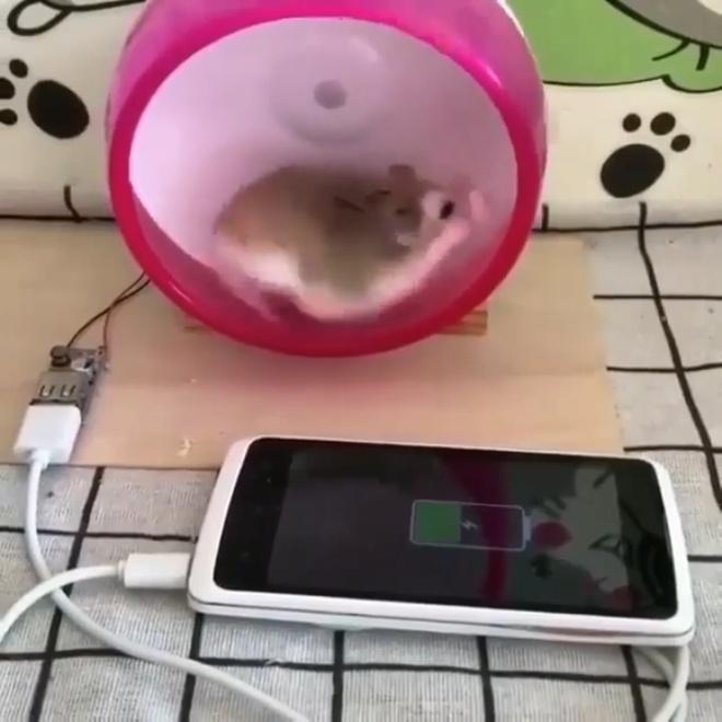 Sac pin dien thoai voi nang luong tu chuot hamster hinh anh