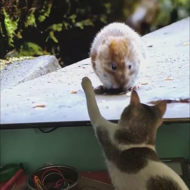 Chu meo co gang bat chuot qua TV hinh anh