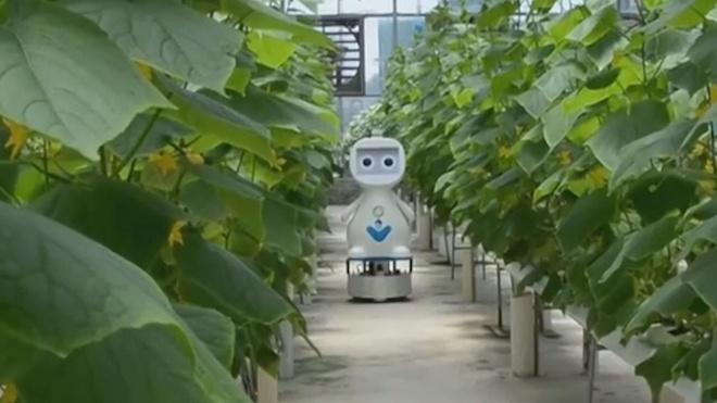Robot ho tro AI va 5G duoc dua vao cham soc vuon hinh anh