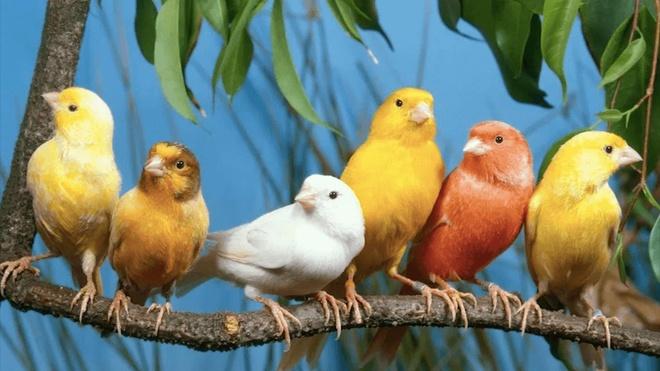 Chợ Afghanistan bán chim từ khắp nơi trên thế giới