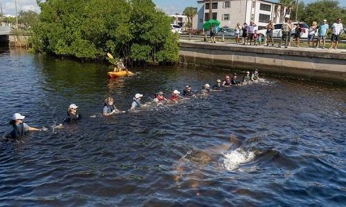 Hàng 'xích người' cứu đôi cá heo mắc kẹt thoát khỏi kênh nước