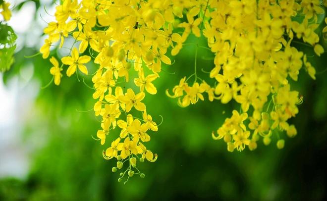 Hue rop troi sac hoa nhung ngay dau ha hinh anh 16