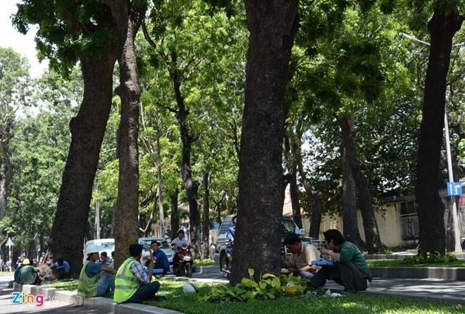 'Qua tham lam khi muon co ca tau dien va cay xanh' hinh anh 1 Hàng cây xanh mát ở Sài Gòn gắn liền với ký ức của nhiều người dân.