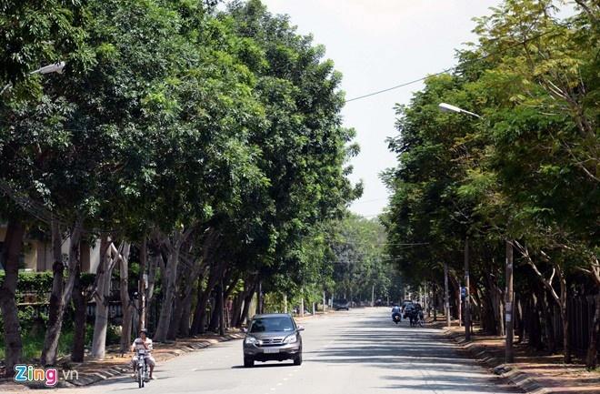 'Qua tham lam khi muon co ca tau dien va cay xanh' hinh anh 2 số cây bị đốn hạ trên đường Tôn Đức Thắng chủ yếu là loại có rễ ăn ngang, lồi trên mặt đất, gây hỏng vỉa hè, mặt đường và có thể ảnh hưởng giao thông. Đây cũng là loại cây nằm trong danh mục cấm trồng trên đường phố mà UBND TP.HCM đã ban hành cuối năm 2013.