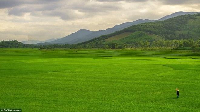 Anh chang lai xe xuyen Australia va sang Viet Nam chup anh hinh anh 1 Cảnh người nông dân giữa cánh đồng lúa xanh mướt ở Việt Nam do Raf Horemans chụp được nhiều người yêu thích.