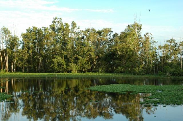 Khu bảo tồn đất ngập nước Láng Sen. Ảnh: Internet