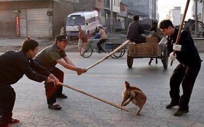 Cho tha rong o cac nuoc chau A: Dang thuong hay dang trach? hinh anh
