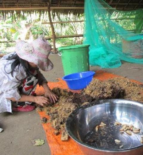 Đuông dừa thường được nuôi trong thùng nhựa, thức ăn là thân, lá dừa được máy say nhuyễn bỏ vào.
