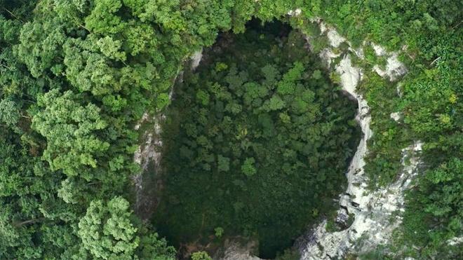 'Toi muon khoc thet vi hang Son Doong qua dep' hinh anh 2 Cảnh rừng nhiệt đới bên trong hang Sơn Đoòng - Ảnh: Ryan Deboodt.